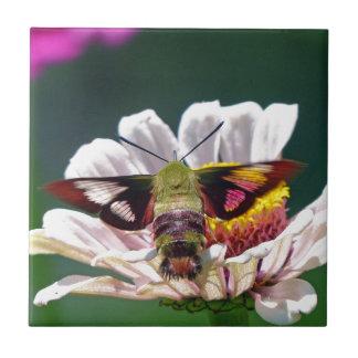 Mite de colibri carreau