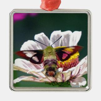 Mite de colibri ornement carré argenté