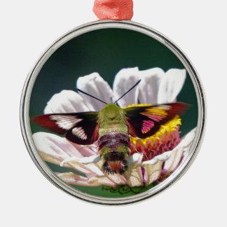 Mite de colibri ornement rond argenté
