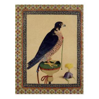 Mme E-14 Falcon, d'un Moraqqa Carte Postale