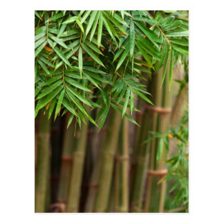 Modèle customisé par arrière - plan en bambou cartes postales