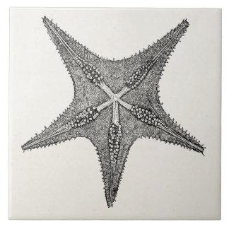Modèle vintage de poissons d'étoile d'antiquité grand carreau carré