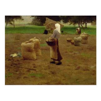 Moisson des pommes de terre carte postale