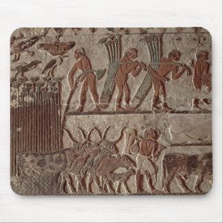 Moisson du papyrus et d'un groupe de vaches tapis de souris