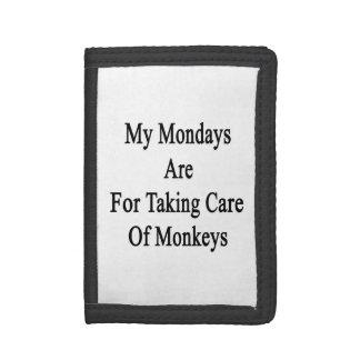 Mon lundi est pour prendre soin des singes