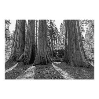 Monarques de la forêt (noir et blanc) photo d'art