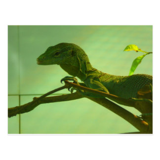 moniteur vert d'arbre carte postale