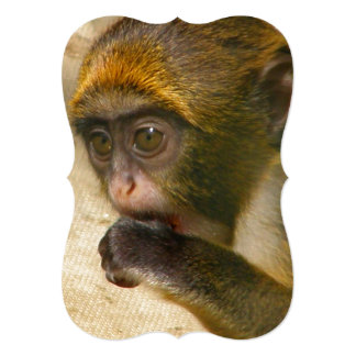Monkey de Baby Immature De Brazza's Carton D'invitation 12,7 Cm X 17,78 Cm