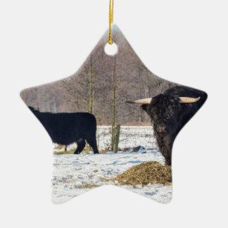 Montagnards écossais noirs dans la neige d'hiver ornement étoile en céramique