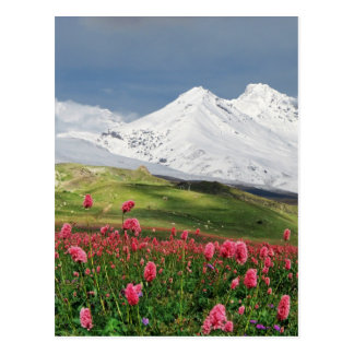 Montagne et pré carte postale