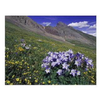 Montagnes et fleurs sauvages dans le pré alpin, carte postale