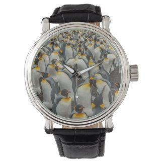 Montre Colonie de pingouin de roi, Malouines
