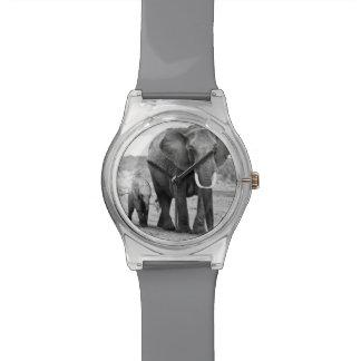 Montre Éléphant africain et veaux   Kenya, Afrique