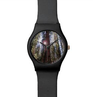 Montre ensoleillée de forêt montres