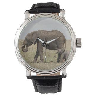 Montre Mère d'éléphant africain avec la marche de bébé