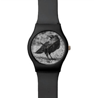 Montre Oiseau noir, corneille, sur les roches