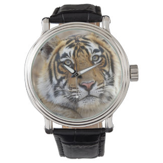 Montre Portrait de tigre de Bengale royal, Ranthambhor