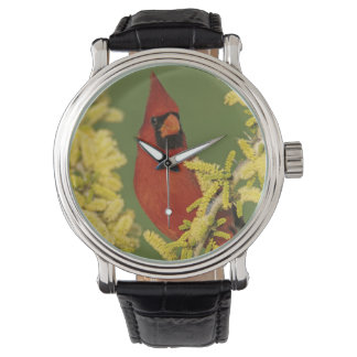 Montres Bracelet Cardinal du nord, cardinalis de Cardinalis, mâle