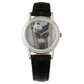 Montres Bracelet Jeune panda grimpant à un arbre, Chine