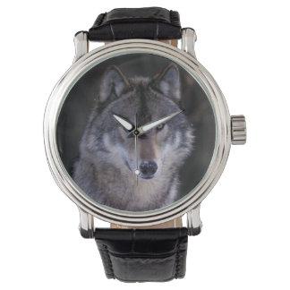 Montres Bracelet L'Amérique du Nord, Canada, Canada oriental, loup
