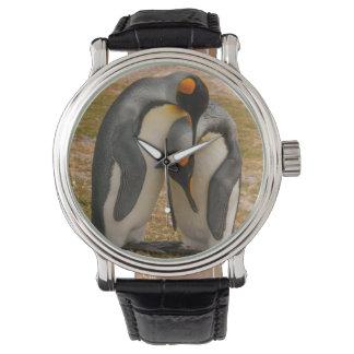 Montres Bracelet Pingouins de roi caressant, les Malouines