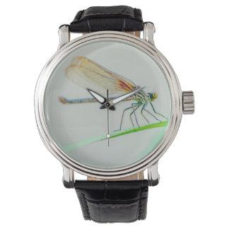 Montres Bracelet Repos de libellule
