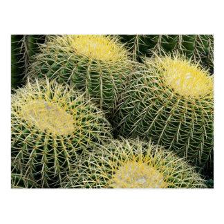 Motif de cactus carte postale