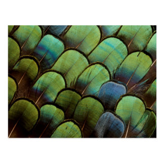 Motif vert de geather de faisan carte postale