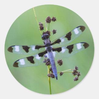 Mouche de dragon étée perché sur l'herbe, Canada Sticker Rond