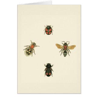 Mouches et scarabées par le studio de vision carte de vœux