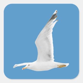 Mouette de vol sticker carré