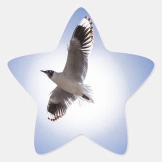 mouette sticker étoile