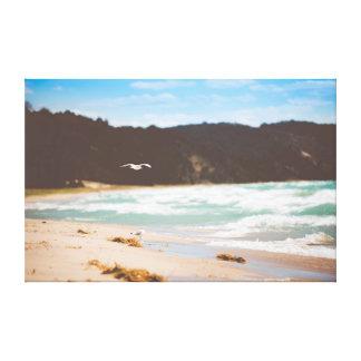 Mouettes de la mer   de l'océan   de la plage   toiles