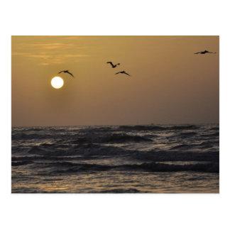 Mouettes et coucher du soleil sur la carte postale