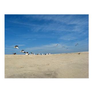 Mouettes sur la carte postale de plage de Cape May