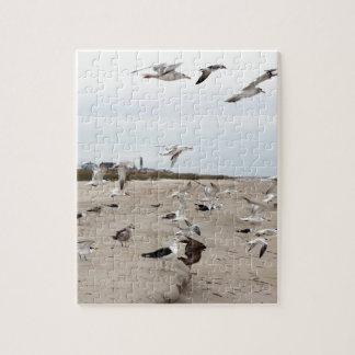 Mouettes volant, se tenant et mangeant sur la puzzle
