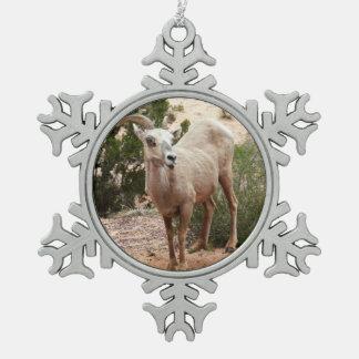 Mouflons d'Amérique drôles au parc national de Ornement Flocon De Neige Pewter