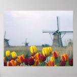 Moulins à vent et tulipes le long du canal dedans affiches