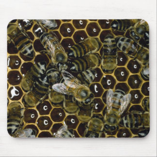 Mousepad - abeilles sur le peigne tapis de souris