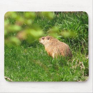 Mousepad de ~ de marmotte d'Amérique Tapis De Souris