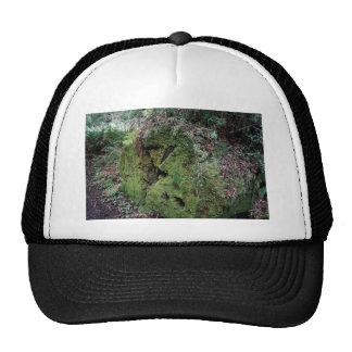 Mousse sur le séquoia tombé casquettes