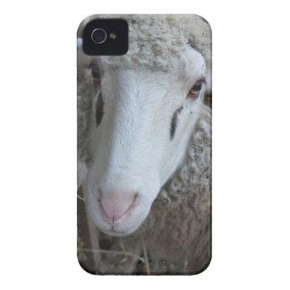 Moutons avec le foin coques iPhone 4