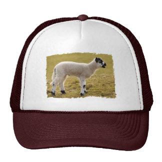 Moutons bêlants de bébé d'agneau blanc noir mignon casquette