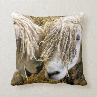 MOUTONS COUSSIN