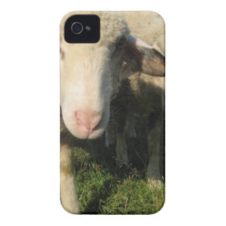 Moutons curieux coques Case-Mate iPhone 4