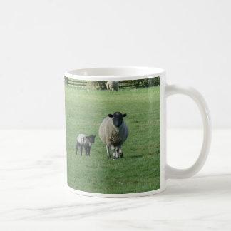 Moutons dans le domaine mug