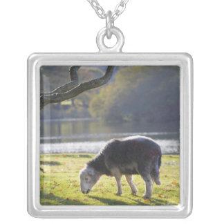 Moutons de Herdwick au rocher de moines, Pendentif Carré