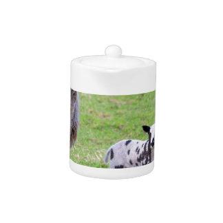 Moutons de mère avec deux agneaux nouveau-nés au