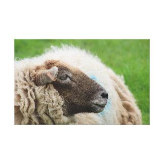 Moutons de mère toiles