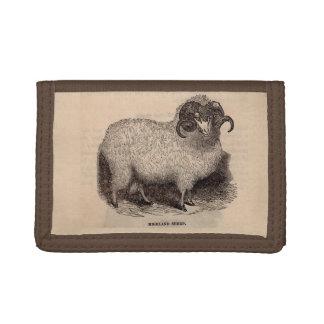 Moutons du 19ème siècle de montagne d'impression